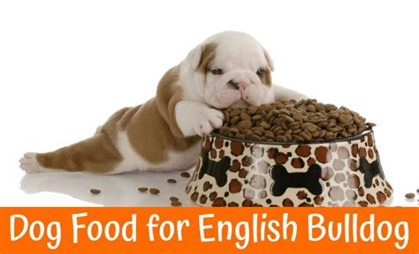 best food for bulldogs best food for bulldog us bones