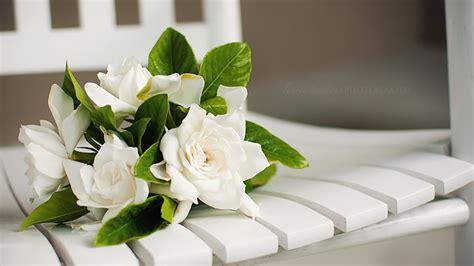 gardenia delivery 100 gardenia flower delivery junior calla bouquet