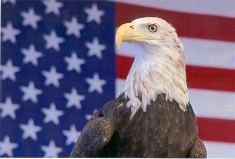 the calling a novel the inn at eagle hill books harriet eagle ambassador emerita national eagle center