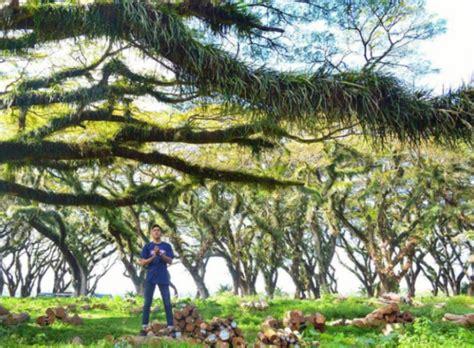 film negeri dongeng surabaya wow wisata ke jawatan benculuk banyuwangi hutan kece