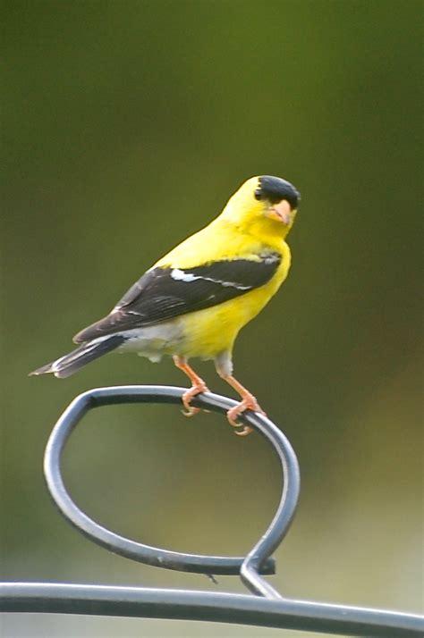 backyard birds matthews nc summer is winding down backyard birds the bird food
