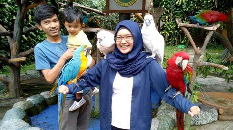Kacamata Rayban Untuk Anak Kecil 5 jenis burung peliharaan yang cocok untuk keluarga dan anak kecil burungnya