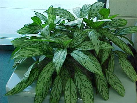 tropical plants wholesale pacific valley tropicals wholesale tropical plants tyd