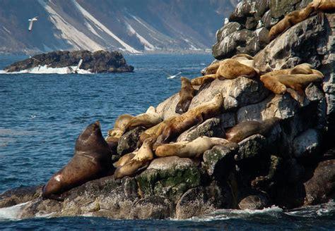 kenai boat tours kenai fjords boat tour what to look for