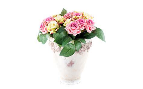 wallpaper flower pot wallpapers roses flowerpot flowers white background