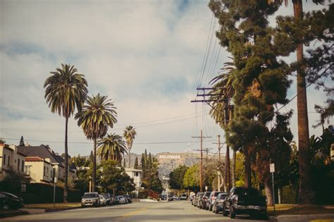 Number Search Los Angeles Los Angeles Is Losing Its Palm Trees Yale E360