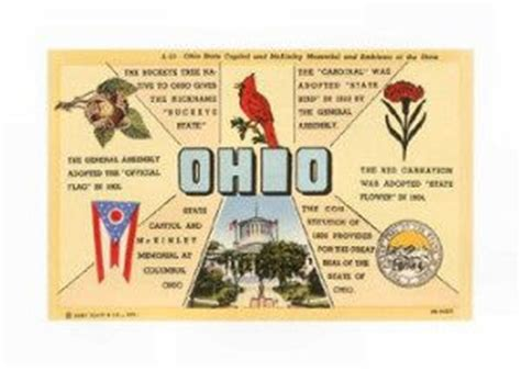 ohio oh state flower list of 50 state floweres of the 17 best images about ohio on ohio flag
