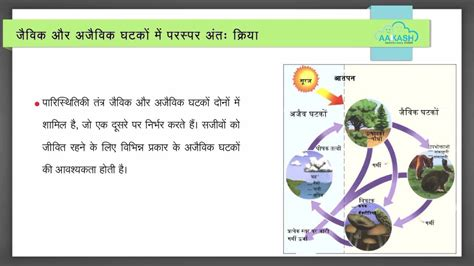 scow meaning in hindi eco system hindi youtube