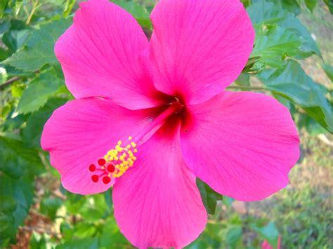 Sepatu Bunga Bunyi jual macam macam bunga hias favorit beserta cara menanamnya