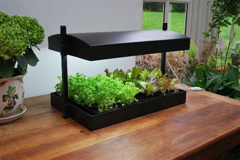 Kitchen Grow Lights Grow Light Kitchen Herb Garden 163 69 99