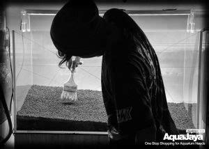 membuat slope aquascape cara membuat aquascape style iwagumi aquajaya