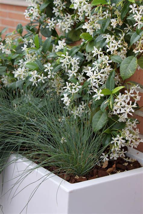 plantas para jardines las 9 mejores plantas para terrazas la habitaci 243 n verde