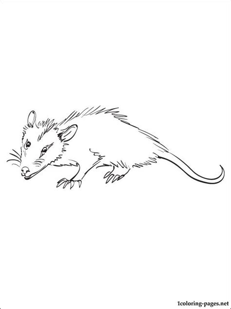 opossum coloring page for free coloring pages
