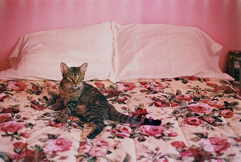 cat bedroom beautiful bed bedroom cat colors image 262879 on