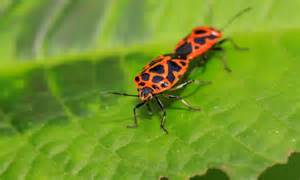 infos utiles plantes et insectes b 233 n 233 fiques pour votre