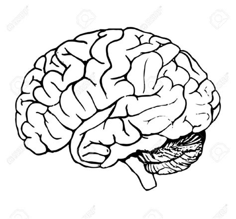 White Brain brain clipart black and white pencil and in color brain