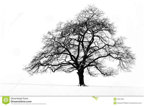 design elements lone tree lone tree in the snow stock image image 23274651