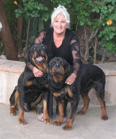 rescue rottweiler pet rescue rottweiler dogs in our photo