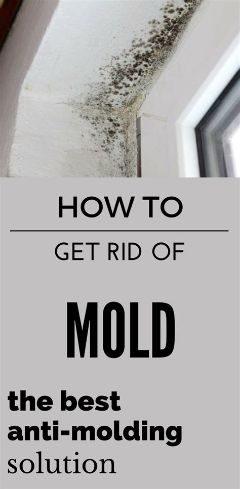 how to get rid of mold the best anti molding solution