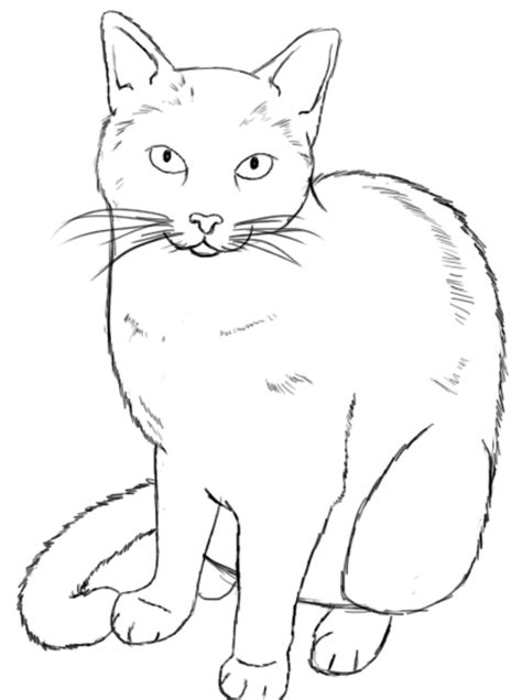 how to draw doodle cat 1 the gallery for gt how to draw warrior cats easy