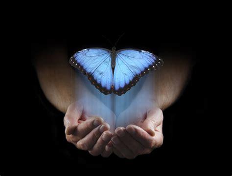 imagenes uñas mariposas le papillon qui croyait toujours 234 tre une chenille