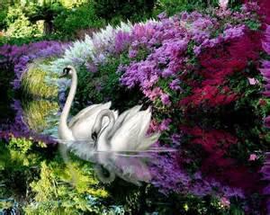 les plus belles fleurs artificielles 100 best images about les plus belles fleurs du monde on