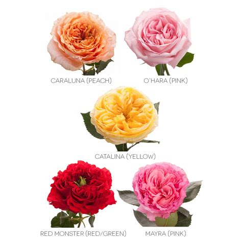 choose  colors garden roses wedding packages