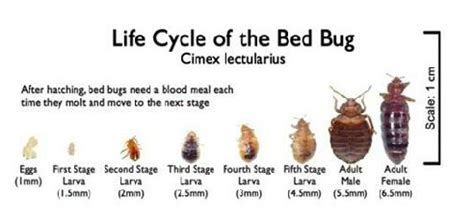 i have bed bugs bed bug claims