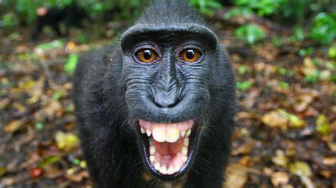 black monkey the funkiest monkeys episode nature pbs