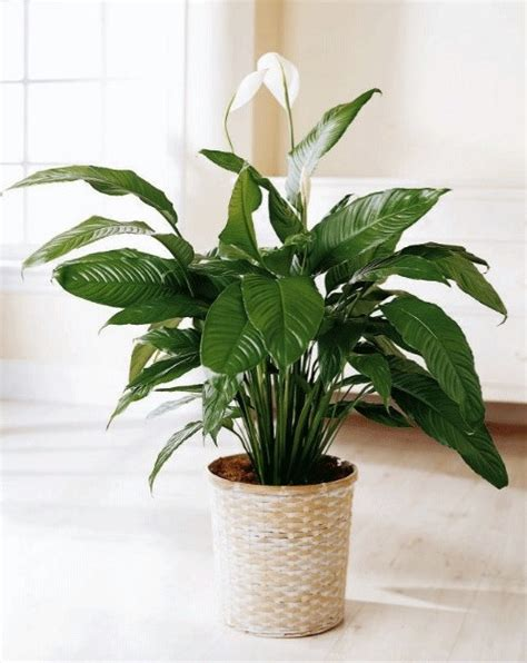 good plants for bedroom 11 plants to keep in your bedroom for a good night s sleep