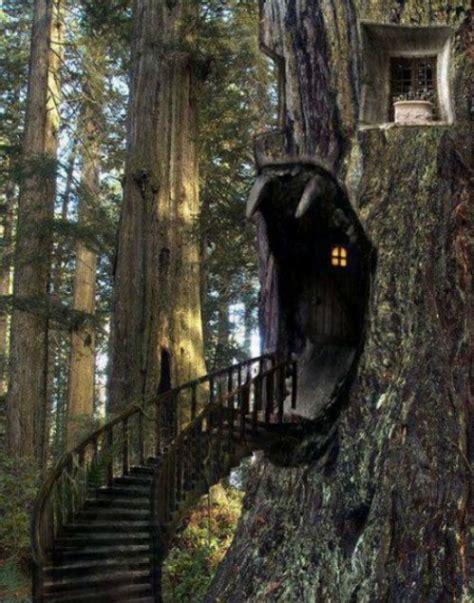 10 Creative Tree House Ideas Taylor Homes | 10 creative tree house ideas taylor homes