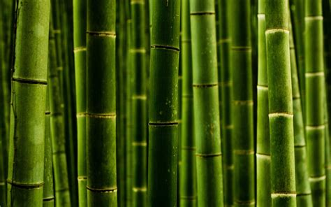 Garden Products Bamboo Poles Bamboo Furnitures Custom Structures » Home Design 2017