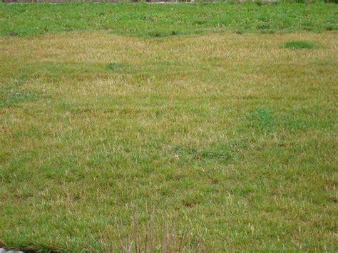 Vertrockneten Rasen Retten by Jede Menge Verdorrte Halme Im Rasen Mein Sch 246 Ner Garten