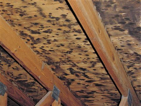 Black Mold In Attic - black toxic mold in attic indoor air