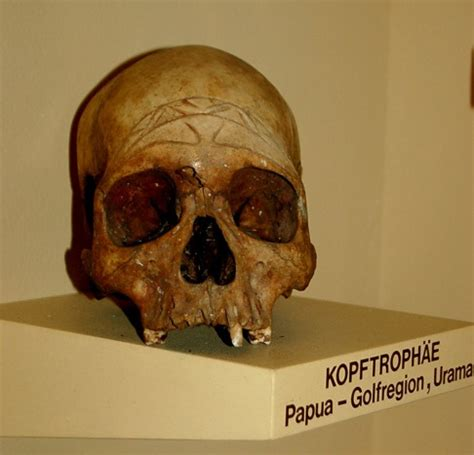 Expedition Skull Original decorated skull from papua new guinea flickr photo