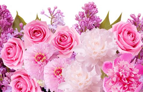 pink roses pretty wallpapers images hd morewallpaperscom