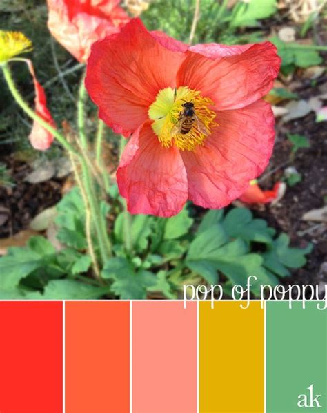 a poppy inspired color palette poppy guava pink gold mint color paint
