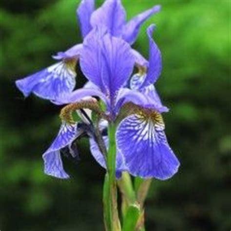 Tanaman Hias Pisang Songgo Langit 225 best tanaman hias bunga images on