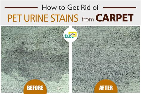 How Do You Clean Urine Stains From A Mattress by How Do You Clean Up Urine On Carpet 28 Images How To