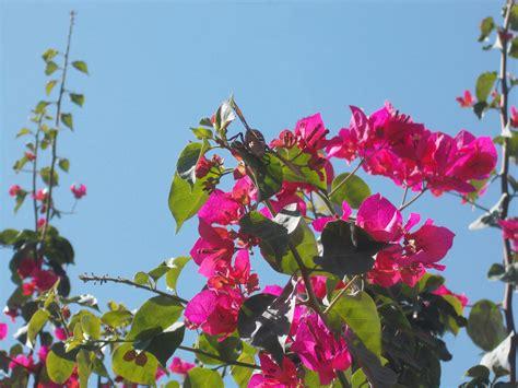 farfalla su fiore farfalla su fiore juzaphoto