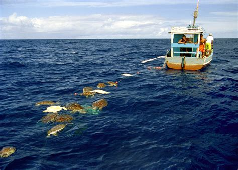 small boat longline system small scale fisheries have big impacts on sea turtles