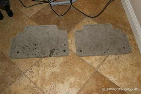 rug doctor before and after before pawcurious with veterinarian and author dr v