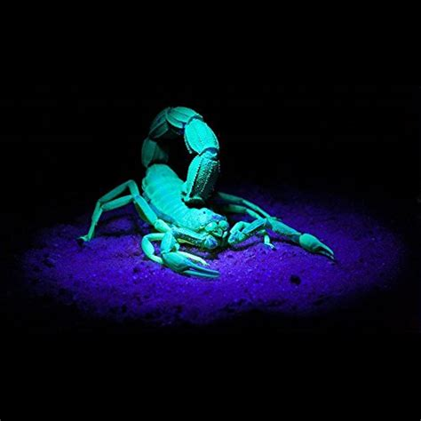 uv light for bed bugs reviews uv black light flashlight ahomeplay blacklight