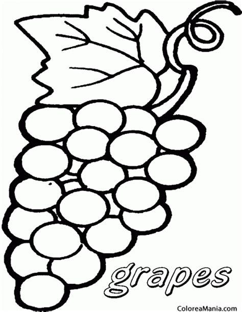 dibujos infantiles uvas colorear racimo uva blanca frutas dibujo para colorear