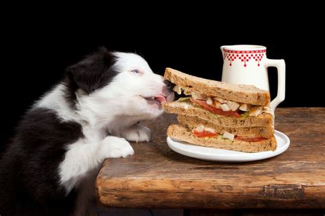 can puppies eat human food human foods that dogs can and can t eat pepper