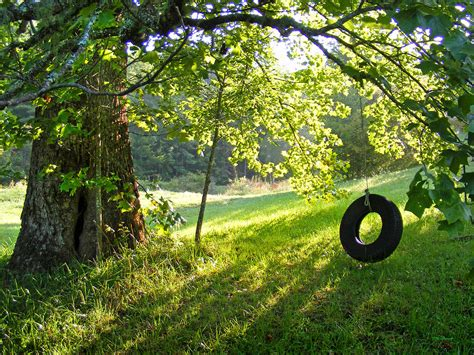 tree with tire swing tree and tire swing in summer photograph by duane mccullough