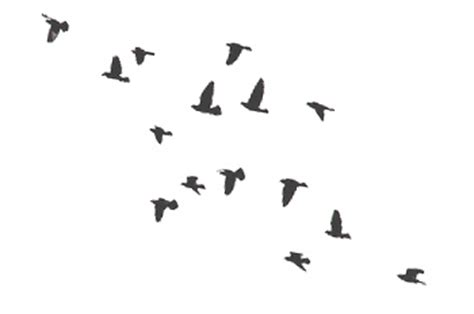flock of birds tattoo designs bird tattoos