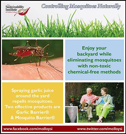 how to control mosquitoes in your backyard how to control mosquitoes in your backyard molloy college supplement 2 keep backyards