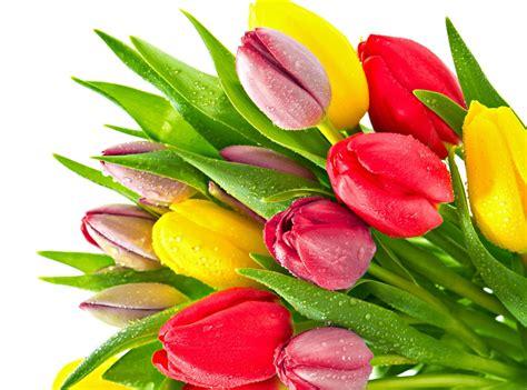 fiori hd bundle of tulip flowers hd wallpaper wallpaper flare