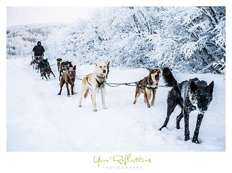 fairbanks sledding fairbanks mushing tours knoxville tn photographer